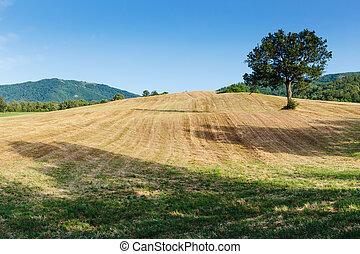 lonely tree in a field