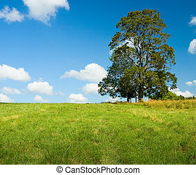 lonely tree in a green field