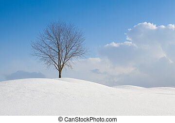 Lonely tree in a winter landscape
