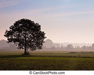 Lonely tree in agricultural landscape during morning mist
