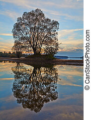 Lonely tree in autumn at sunset in silhouette against a golden clouds and blue sky  with reflection over  water.