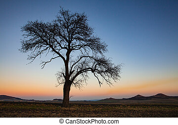 Lonely tree in Central Bohemian Uplands, Czech Republic.