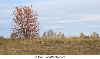 Lonely tree in field with red autumn leaves - Lonely tree in...
