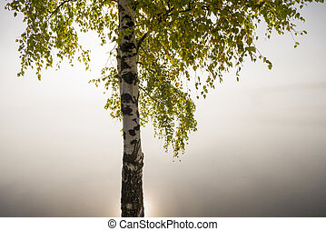 Lonely tree in misty morning