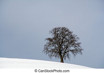 lonely tree in snow landscape