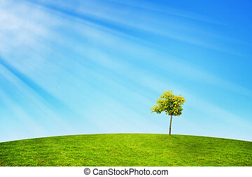 Lonely Tree in Sun Rays