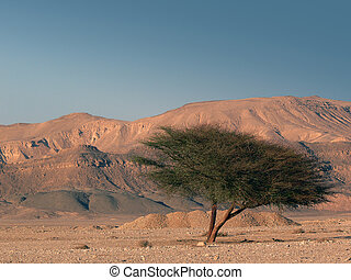 Lonely tree in the Desert