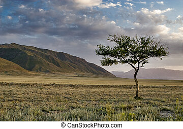 Lonely tree in the desert at sunset