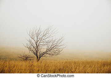 Lonely tree in the fog