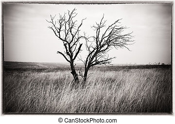 Lonely tree in the hill. Composition of nature.
