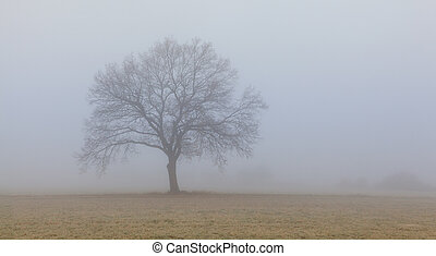 Lonely tree in the morning mist.