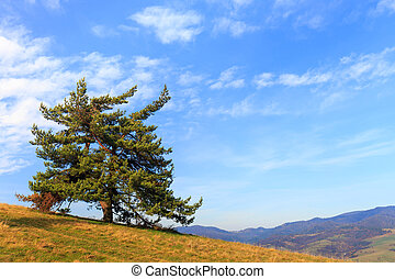 Lonely tree in the mountains