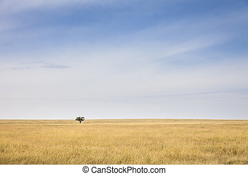 Serengeti - Lonely tree in the vast plains of the Serengeti,...