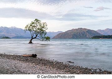 Lonely tree in Wanaka lake, New Zealand