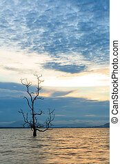 Lonely tree in water at sunset