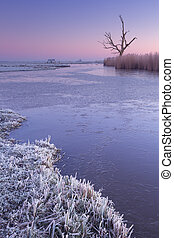Lonely tree in winter at dawn in The Netherlands