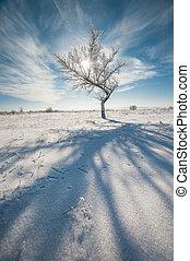 Lonely tree in winter garssland