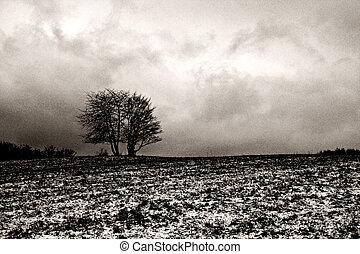 Lonely tree in winter landscape, b&w