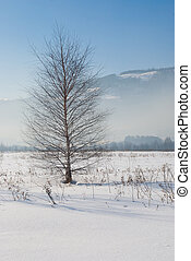 Lonely tree in winter scenery