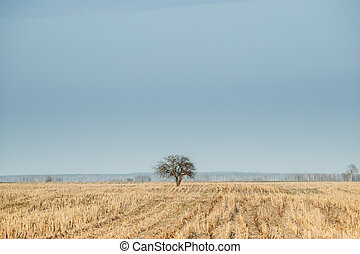 Lonely Tree In Without Foliage In Spring Field. Agricultural Landscape