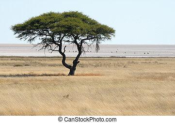 Lonely tree landscape at the Etosha Pan