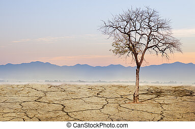 Lonely tree landscape dry ground with morning mist