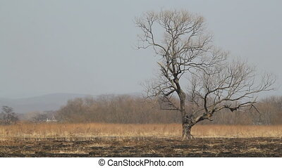 lonely tree  - lonely dry tree on the scorched earth