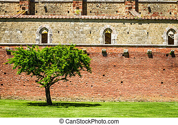 Lonely tree on a background of ruins