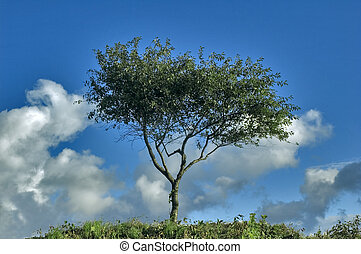 Lonely tree on a background of the sky with clouds