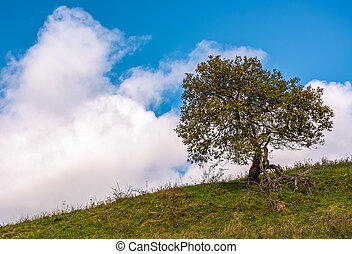 lonely tree on a grassy hillside with huge white cloud on...