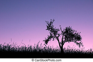 Lonely tree on a hill in back light