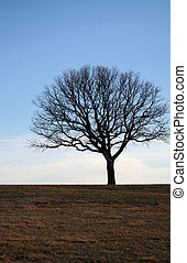 Lonely Tree on a Hill Top