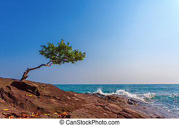 lonely tree on a rock