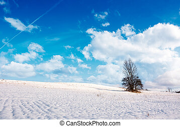 lonely tree on a snowy hillside. lovely nature scenery on...