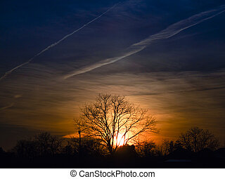 Lonely tree on a sunset background.