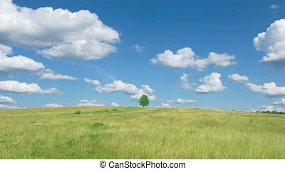 Lonely tree on blue sky and cloud b