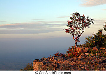 lonely tree with beautiful sunset on cliff