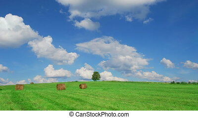Lonely tree on field with hay bales