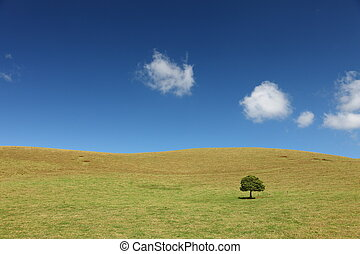 Lonely Tree on grassland at Big Island, Hawaii
