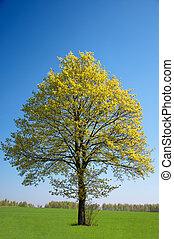 lonely tree on green field