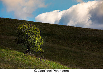 lonely tree on hill side on a cloudy autumn day. lovely...