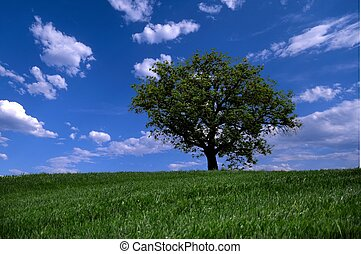 lonely tree on sky background