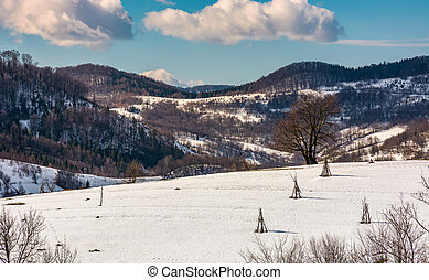 lonely tree on snowy hillside. beautiful winter scenery in...