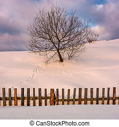 lonely tree on snowy hillside behind the fence. beautiful...