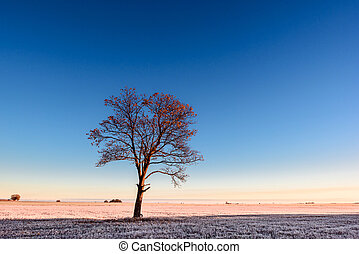 Lonely tree on the bank