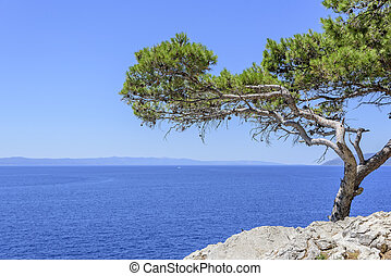 Lonely tree on the beach at sunny day.