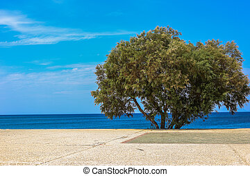 Lonely tree on the beach