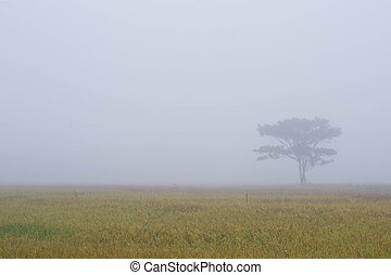 Lonely tree on the cornfield with morning mist
