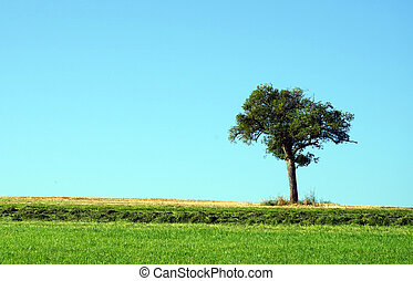 Lonely tree on the grass