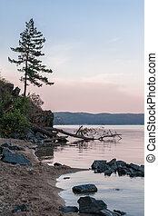 Lonely tree on the lake's coast at sunrise